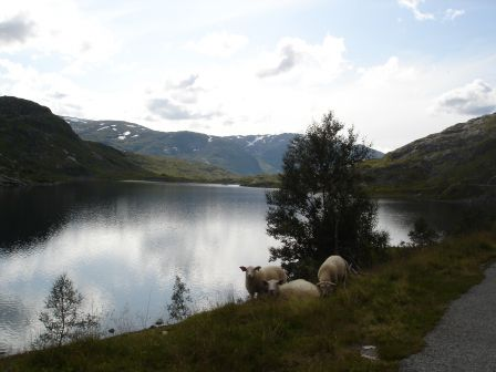 Scandinavie_2009-06