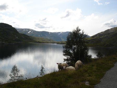 Scandinavie_2009-06